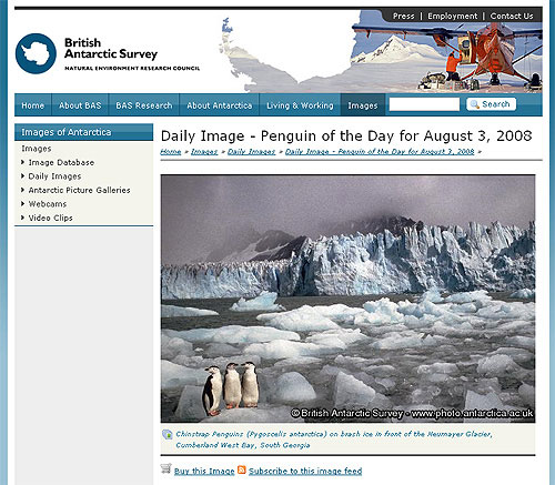 screenshot (73KB) : Figure 4 : Penguin of the Day on http://www.antarctic.ac.uk/