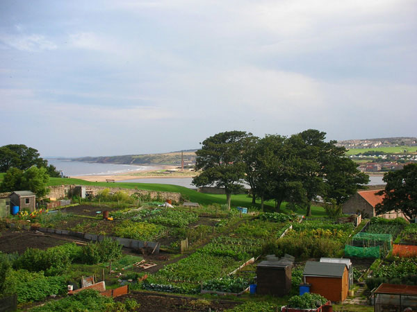 photo (66KB) : Figure 1 : Figure 1: Allotments & estuary