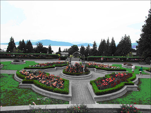 photo (73KB) : Rose garden on the campus of the University of British Columbia