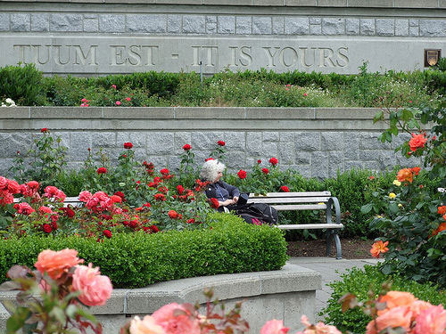 photo (91KB) : A delegate taking a moment to reflect on the Conference in the rose garden