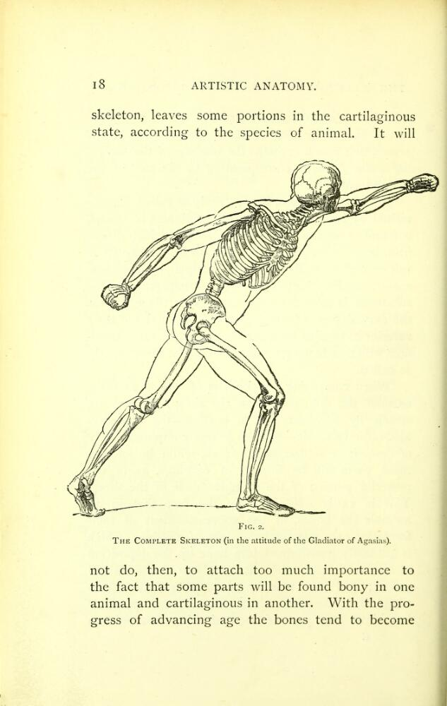 Figure 1: Artistic Anatomy by Mathias Duval, 1884, page 18